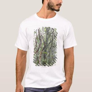T-shirt vigne et branches tordues dans la forêt tropicale