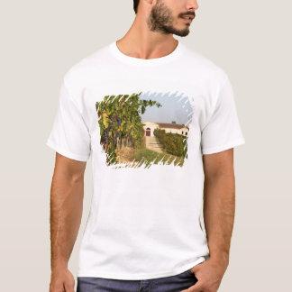 T-shirt Vignobles, petites vignes de verdot et