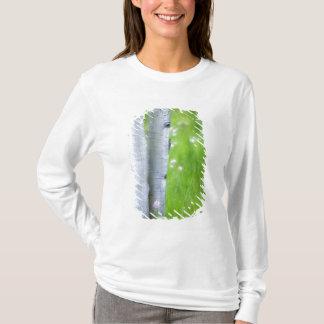 T-shirt Ville des Etats-Unis, le Colorado, lac, trembles