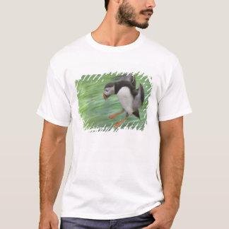 T-shirt Vol de macareux atlantique (arctica de Fratercula)