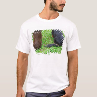 T-shirt Vue arrière de deux chiens de teckel