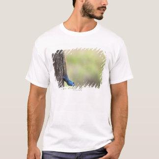 T-shirt Vue de côté d'un agame d'arbre (Acanthocerus
