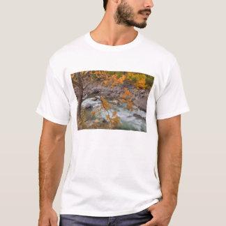 T-shirt WA, réserve forestière de Wenatchee, arbre