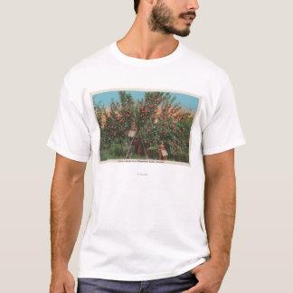 T-shirt Wenatchee, WAView de champ de pommiers et de