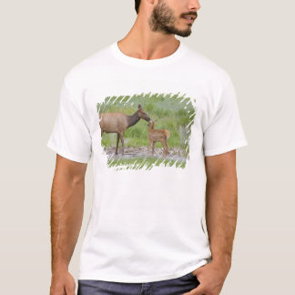 T-shirt WY, parc national de Yellowstone, veau d'élans et