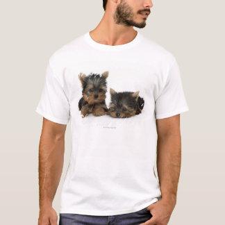 T-shirt Yorkshire Terrier