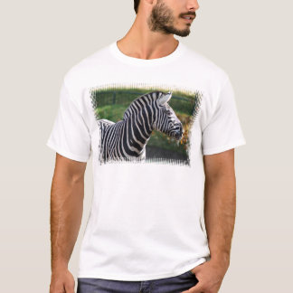 T-shirt Zèbre hirsute