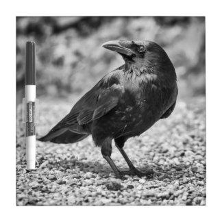 Tableau Effaçable À Sec Oiseau noir, corneille, sur les roches