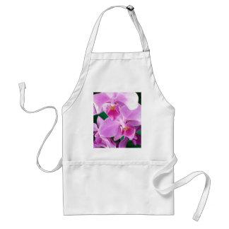 Tablier L'orchidée fleurit plan rapproché dans le rose