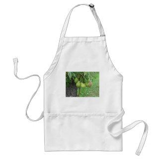 Tablier Poires vertes accrochant sur un poirier croissant