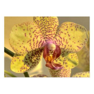 Taches jaunes de pourpre de Phalaenopsis Modèles De Cartes De Visite