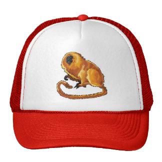 tamarin d'or de lion casquettes