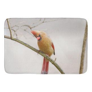 Tapis de bain cardinal femelle curieux