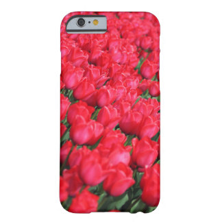 Tapis de Falln des tulipes cramoisies Coque iPhone 6 Barely There