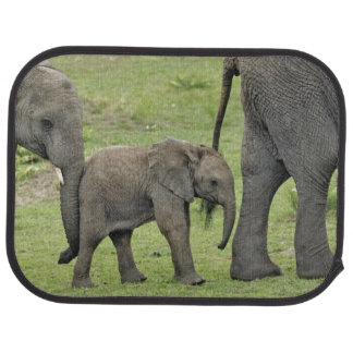 Tapis De Sol Éléphant africain femelle avec le bébé, Loxodonta