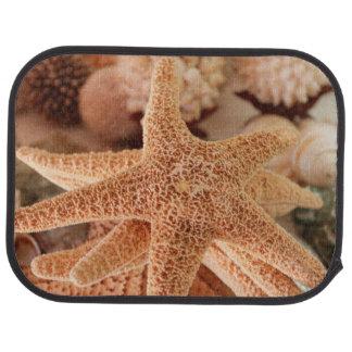 Tapis De Sol Étoiles de mer sèches vendues sous le nom de