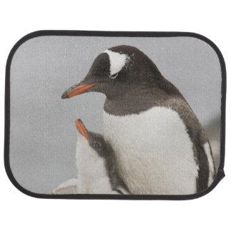 Tapis De Sol L'Antarctique, île d'Aitcho. Poussin de pingouin
