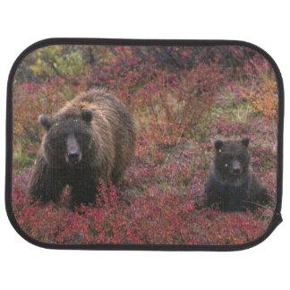 Tapis De Sol Les Etats-Unis, Alaska, parc national de Denali.