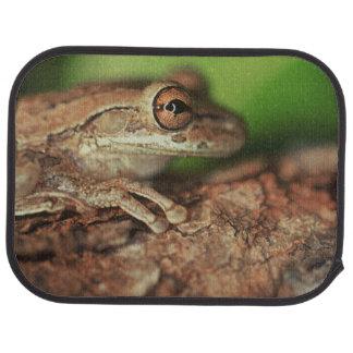 Tapis De Sol Les Etats-Unis, la Floride, grenouille d'arbre