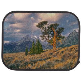 Tapis De Sol Les Etats-Unis, Wyoming, Teton grand NP. Le lever