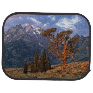 Tapis De Sol Les Etats-Unis, Wyoming, Teton grand NP. Un cèdre