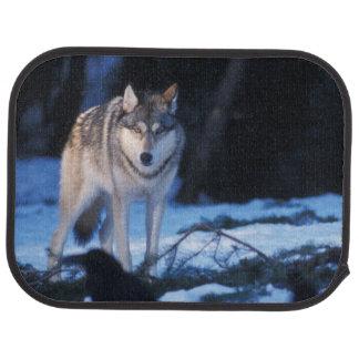 Tapis De Sol loup gris, lupus de Canis, dans les collines des 3