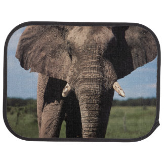 Tapis De Sol Mâle de jeunes d'éléphant