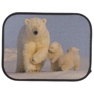 Tapis De Sol ours blanc, maritimus d'Ursus, truie avec 3