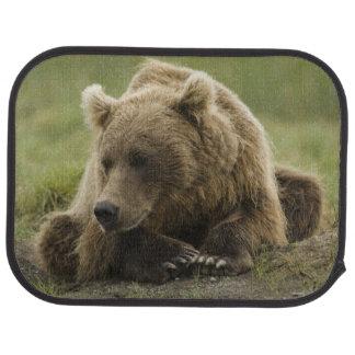 Tapis De Sol Ours de Brown, ou ours gris côtier, Ursus