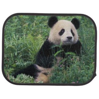 Tapis De Sol Panda géant dans l'herbe, vallée de Wolong,