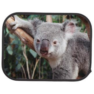 Tapis De Sol Parc de faune de Featherdale, ours de koala