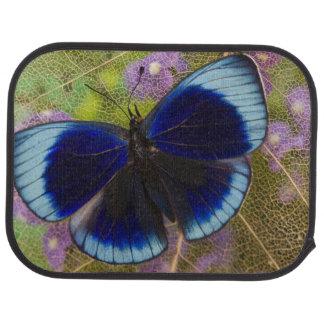 Tapis De Sol Photographie de Sammamish Washington de papillon
