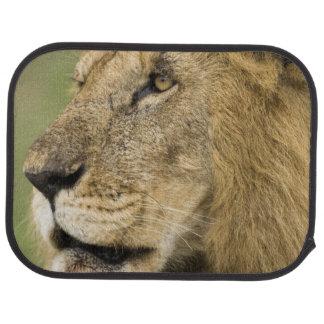Tapis De Sol Portrait africain de lion, Panthera Lion, dans