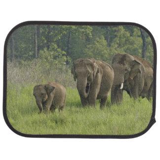 Tapis De Sol Sortir de famille d'éléphant d'Asie