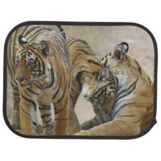 Tapis De Sol Tigre et jeunes de Bengale royaux ceux - touchant