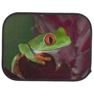 Tapis De Sol Treefrog aux yeux rouges