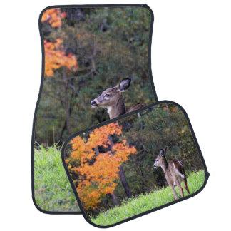 Tapis De Sol Un cerf commun dans le domaine en automne