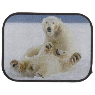 Tapis De Sol Un ours blanc femelle et son petit animal jouent
