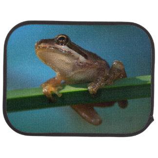 Tapis De Sol Une grenouille d'arbre de bébé