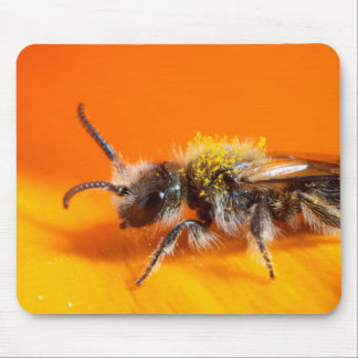Tapis De Souris Abeille pollinisant une fleur