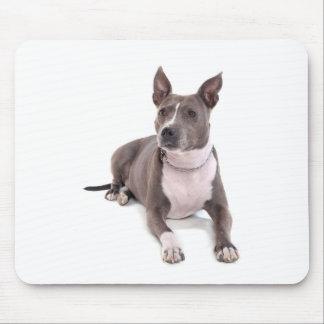 Tapis De Souris american staffordshire terrier