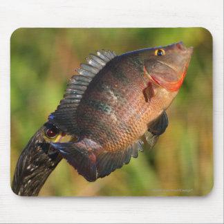 Tapis De Souris Anhinga et poissons