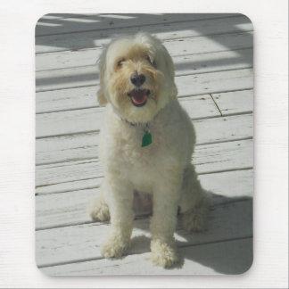 Tapis De Souris Bailey le beau chien sur la plate-forme