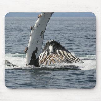 Tapis De Souris Baleine de bosse