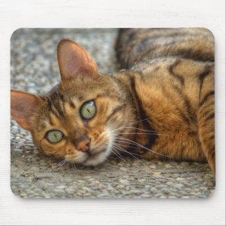 Tapis De Souris Beau chat du Bengale
