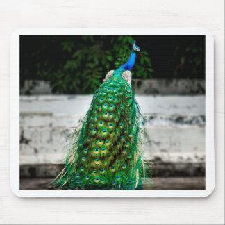 Tapis De Souris belles couleurs d'art de plume de paon