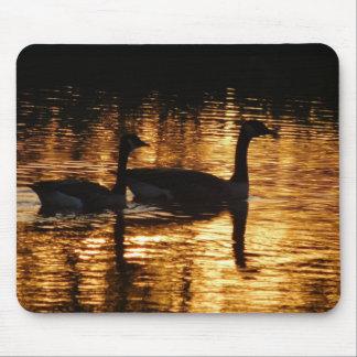 Tapis De Souris Belles oies canadiennes sur un lac au coucher du