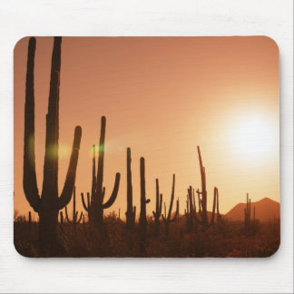 Tapis De Souris Cactus sur le désert