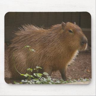 Tapis De Souris Capybara