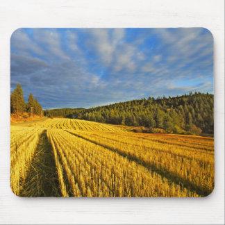 Tapis De Souris Champ de blé après récolte